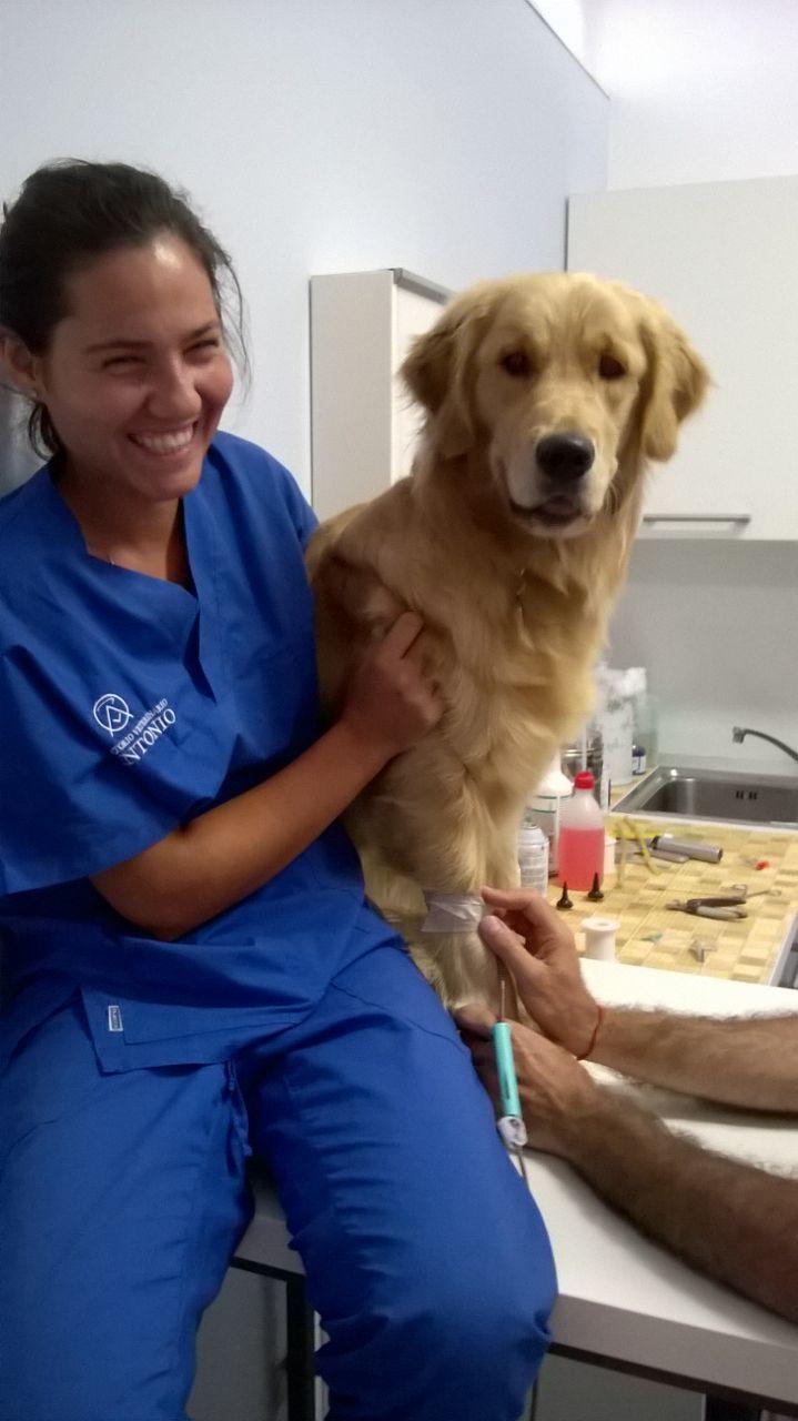Clinica veterinaria s antonio tequila cane generoso for Tequila e bonetti cane